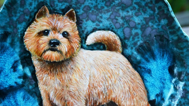 (Polski) Talerz – Norwich Terrier